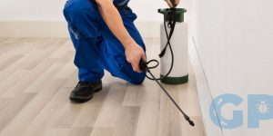 A Galway Exterminator working in a home
