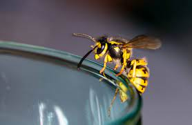 wasp on an empty glass